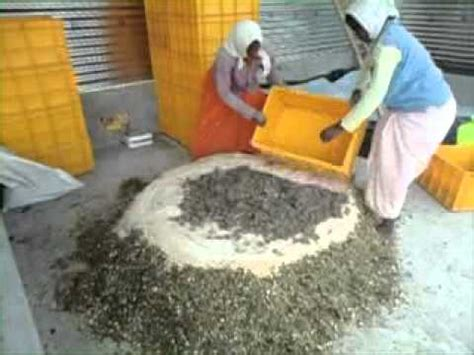 Silage Making In India Youtube