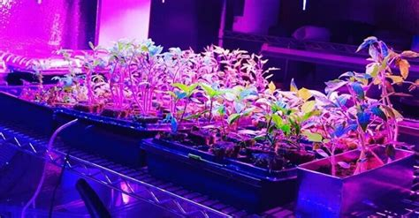 Artificial Light For Plants by Using Artificial Grow Lights For Indoor Plants How To Get
