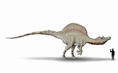Spinosaurus Hyrotrioskjan Deviantart Oxalaia Wallpapers Dinosaur Aegyptiacus