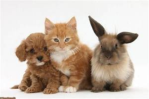 Puppy Kitten And A Bunny What More Could You Want Bunnies