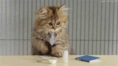 Interview Cats Nail Soon Illustrated Jobs Being