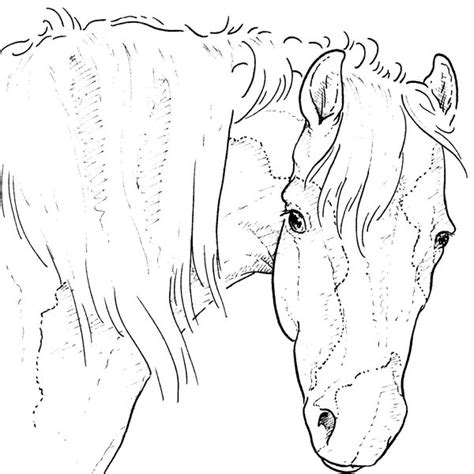 Kleurplaat Paard Tinker by Kleurplaten Tinker Paard Brekelmansadviesgroep