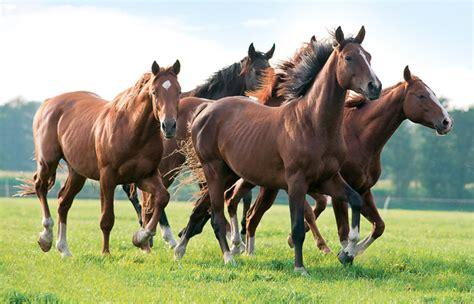 gregarious animals social pferde behavior horses horse outrun supported natural