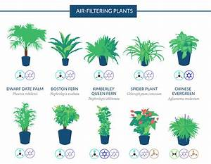 Purifying Plants: NASA Guide to Air Filtering Houseplants Gadgets, Science & Technology