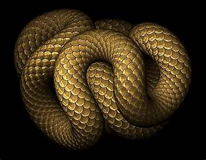 Snake GIF - Find & Share on GIPHY