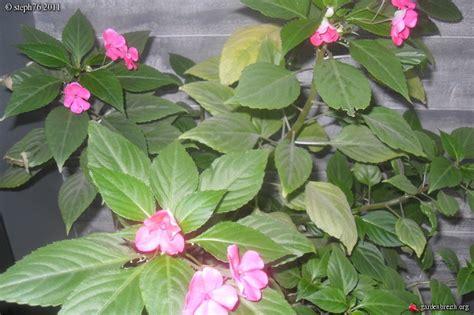 goutte a goutte plante interieur 28 images 2pcs contr 244 leur irrigation goutte 224 goutte