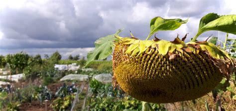 Garten Im Herbst Düngen by Aufgemerkt Pflanzen Nicht Mehr D 252 Ngen Im Herbst Gr 252 Neliebe