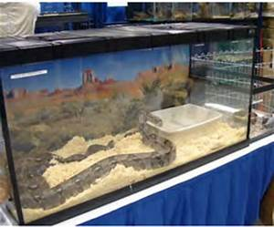 Pets Snake | Pet Reptiles UK