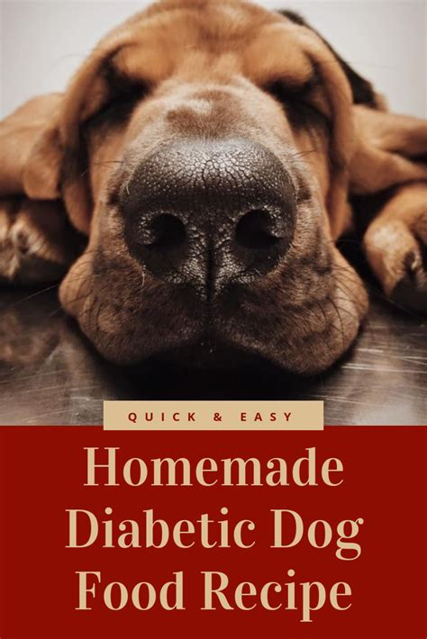 What is the average life expectancy do not make the separate meal out of it! Quick & Easy Homemade Diabetic Dog Food Recipe   Diabetic dog food, Diabetic dog, Dog food recipes