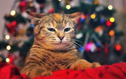 Christmas Cat Wallpapers Cats Background Tree Singing