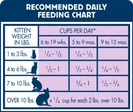 how much food to feed a cat blue healthy growth kitten food chicken brown rice