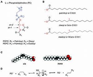 Molecular structures of L-α-phosphatidylcholine (A) and of ...  Phosphatidylcholine