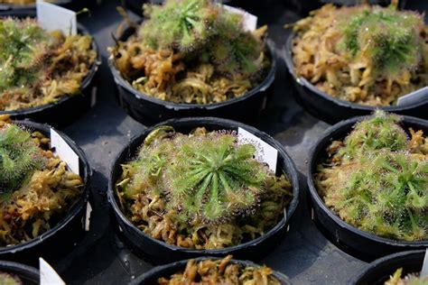 งานขยายพันธุ์พืชด้วยวิธีเพาะเลี้ยงเนื้อเยื่อ | สวน ...