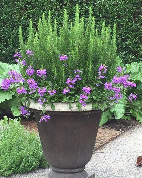 creative garden pots and planters