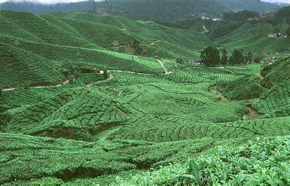 Ibu Hamil 03 Pertanian Di Malaysia Think Tank