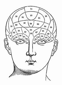 Royalty Free Phrenology Head Clip Art  Vector Images