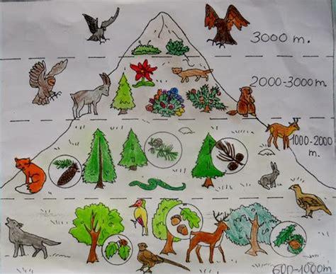 lozainetto geografia la flora  la fauna delle alpi