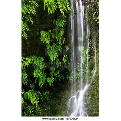 Ferns River Stock Photos & Images - Alamy