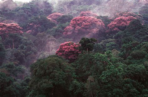 indigenas panamenos quieren aprovechar mejor sus bosques