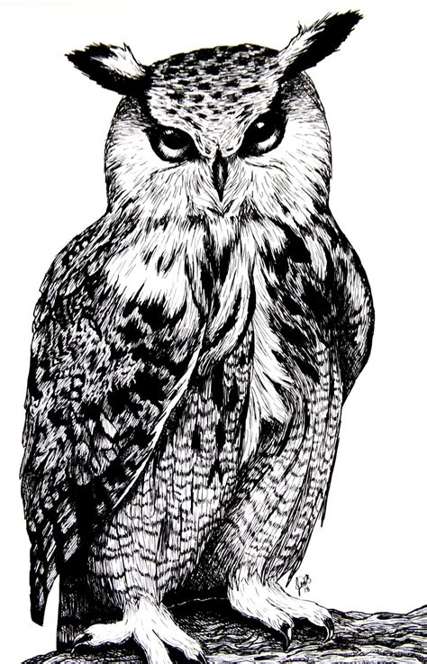 jennifer  art  great horned owl alberta distance