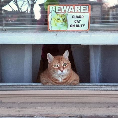 cats     house guarding