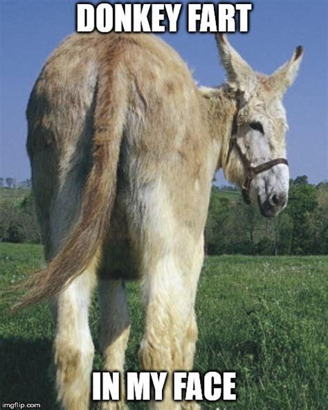 donkey ass memes gifs imgflip