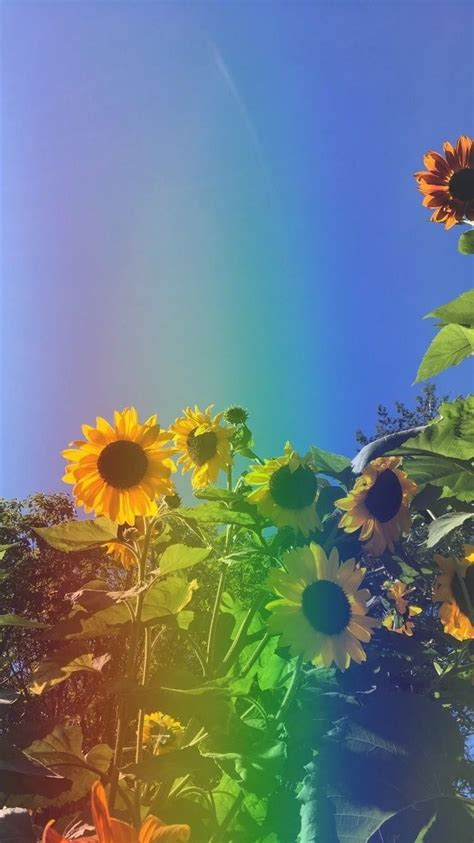 pin by coco on wallpapers sunflower wallpaper