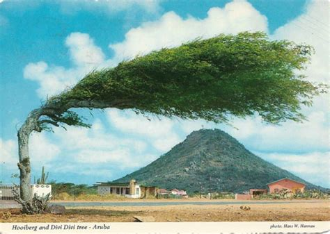 The Worlds Most Amazing Trees
