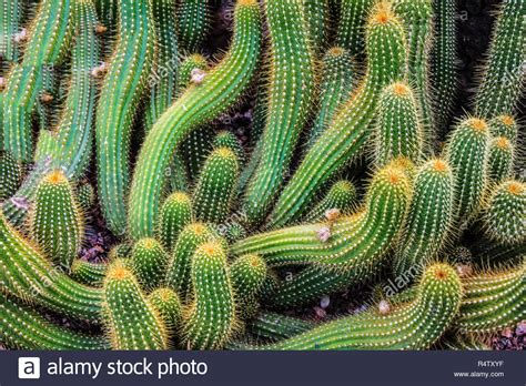 Haus Kaufen Rocky Mountains Usa by Der Kaktus Pflanze In Den Rocky Mountains Stockfoto Bild