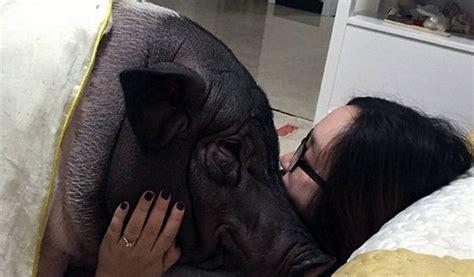 زندگی عاشقانه یک دختر کنار خوک عکس