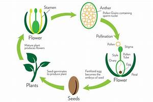 What Does The Process Of Pollination Involve