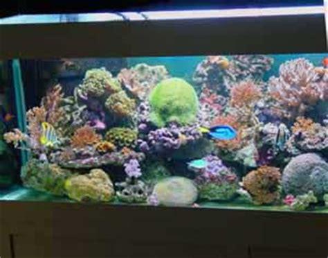 aquarium 1000 litres trouvez le meilleur prix sur voir avant d acheter