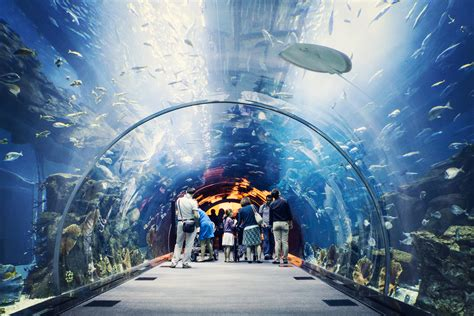 the dubai mall aquarium 10 interesting facts about dubai mall aquarium