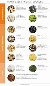 Plant Protein A Nutrition Q A About Plant Protein