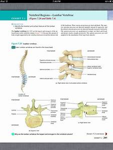 Anatomy And Physiology Chapter 7