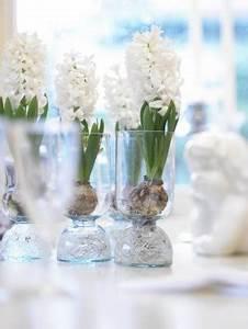 Tulpen Im Glas Ohne Erde : hyazinthenfr hling im glas garten pflanzen news green24 hilfe pflege bilder ~ Frokenaadalensverden.com Haus und Dekorationen