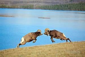 John E Marriott Canadian Wildlife and Nature Photography
