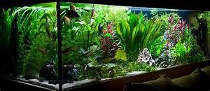 Aquarium Einrichten Beispiele : 1120 liter s wasser aquarium 200x80x70 ~ Frokenaadalensverden.com Haus und Dekorationen
