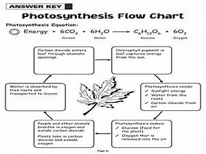 Photosynthesis Worksheet Answers