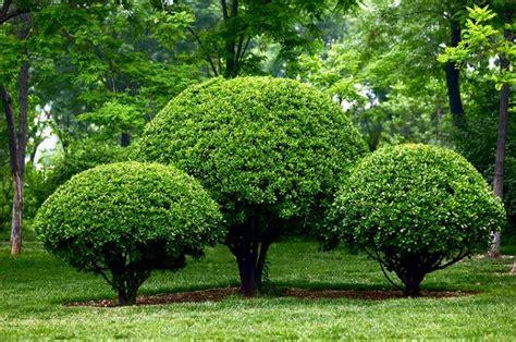 small outdoor trees artystyczne formowanie roś krak 243 w przycinanie krzew 243 w 5534