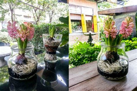 DIY กระถางดอกไม้จากโหลแก้ว