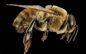 9 Reasons To Love And Protect Honeybees