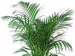 Plante Verte D Appartement : plantes d appartement faciles photos de magnolisafleur ~ Premium-room.com Idées de Décoration