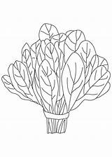 Spinach Coloring Vegetables Clipart Vegetable Plant Pages Squash Printable Letters Clipartix Clipground Drawings Root sketch template