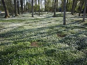 Couvre Sol Vivace : plante tapissante liste ooreka ~ Premium-room.com Idées de Décoration