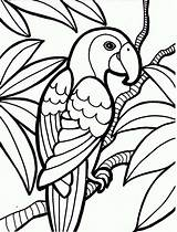 Coloring Parrot Rainforest Pages Printable Bird Print Printables sketch template