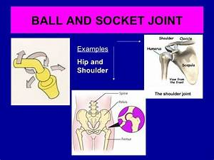 Joints and sporting actions