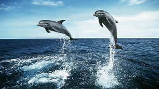 Dolphins Jump Wallpape...