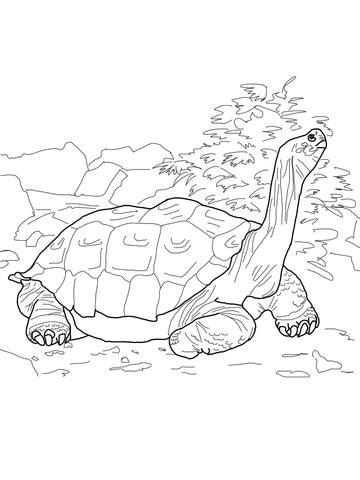 galapagos tortoise coloring page supercoloringcom