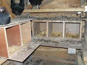 Nid Pour Poulailler : le nid trappe ~ Premium-room.com Idées de Décoration
